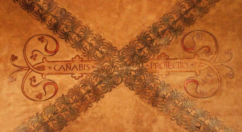 Risultato immagini per cannabis protectio